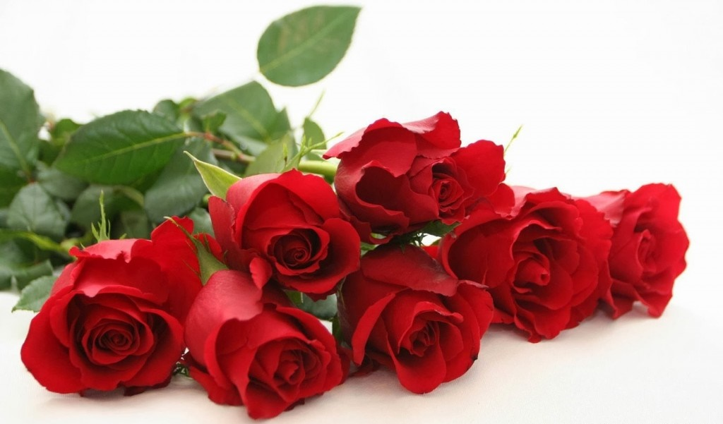 Happy Rose Day 2016 Wallpapers Images