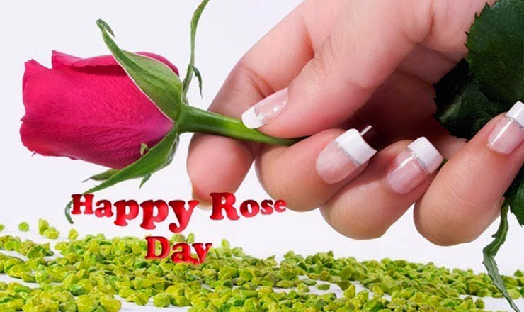 Rose Day Wishes Images, Wallpapers, Whatsapp DP Image