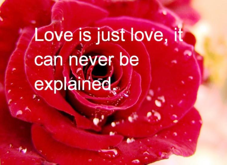 rose-day-sms-quote